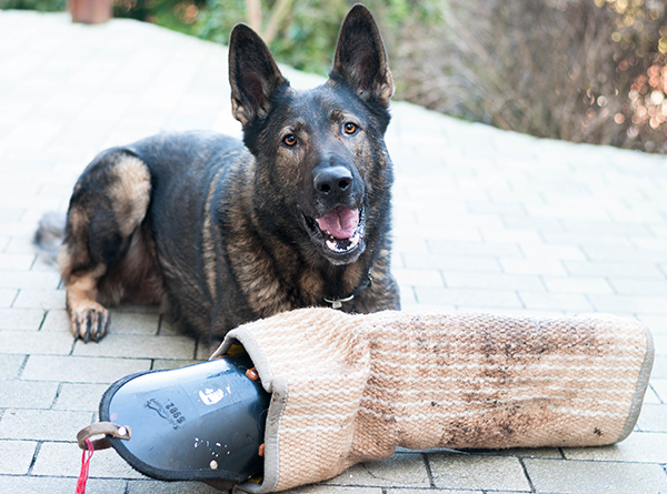 Hundesport - OG Opperzau