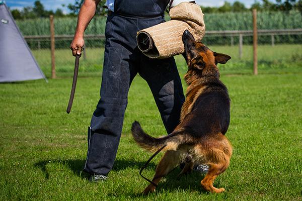 VPG Schutzhund - OG Opperzau